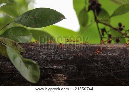 Ant insects recollecting food at nature background