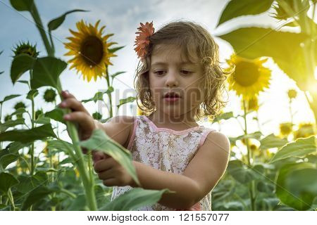 Little Girl Playing With Sunflowers