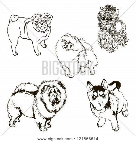 Vector Set Of Dog Breeds Silhouettes