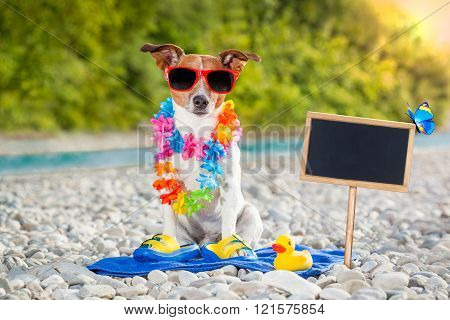Summer Vacation Dog