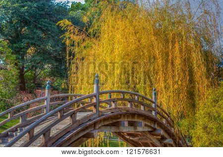 Yellow Willow Tree in Autumn with Curved Foreground Bridge