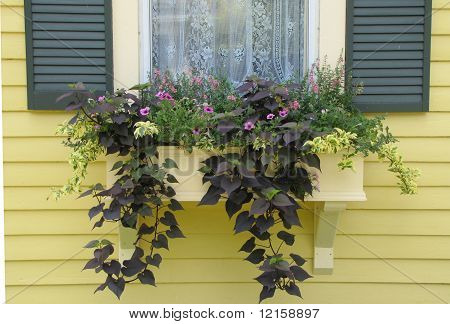 Windowbox Flowers