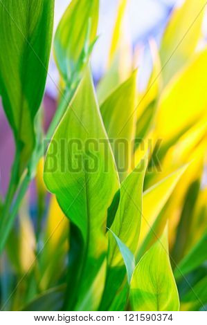 Lush green leaves of tropical plants