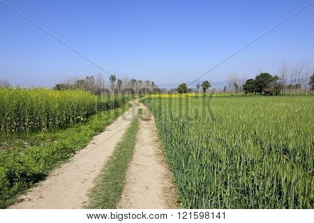 Scenic Punjabi Landscape