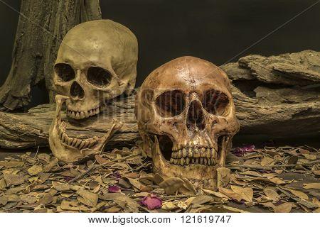 still life couple human skull art abstract background