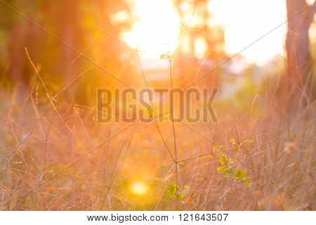 Sunset and dry grass Sun beam background