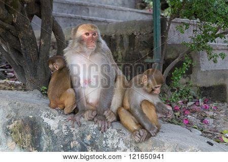 Monkeys at Swayambunath temple in Kathmandu, Nepal.