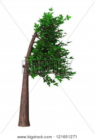 Digital render of a green bonsai tree isolated on white background, Fukinagashi or windblown style