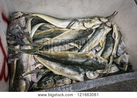 Prepared Fish In A Fish Market