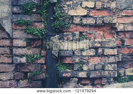Old Vintage Brick Wall Closeup, Overgrown Drip Rail