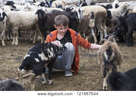 a boy and a goat on a farm