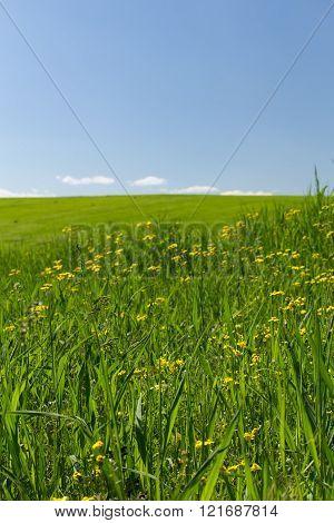 Flowers In The Wheat Field