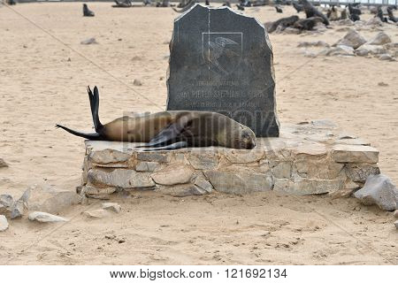 Sleeping Cape Fur Seal, Namibia