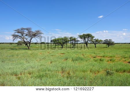 African Bush Savannah, Namibia