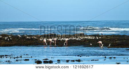 Penguin Islands Luderitz bay Namibia
