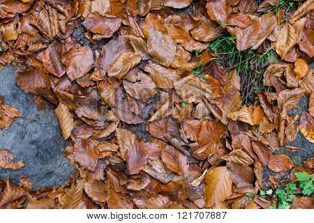 Orange Leaves Falls On The Ground