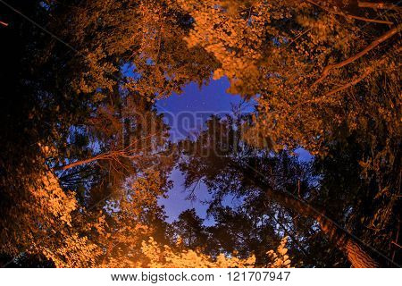 Orange Light On The Trees Near The Fireplace In The Forest At Night With Stars On The Sky