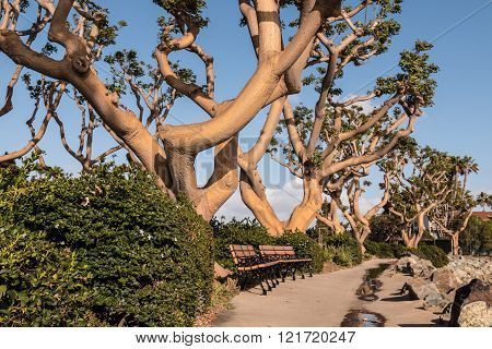 Coral Trees at Spanish Landing in San Diego