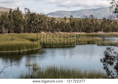 Mountains, Trees, Marsh Grass and Lake