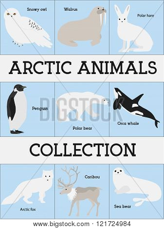Arctic animals collection. Set of flat minimal vector illustrations of polar mammals and birds.Pengu