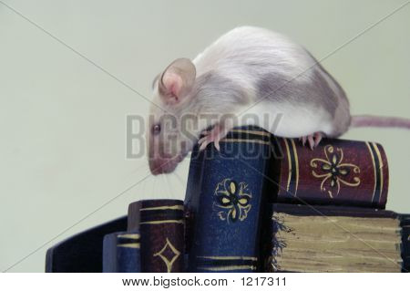 The Mouse On The Stack Of Books.