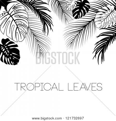 Tropical black and white leaves background