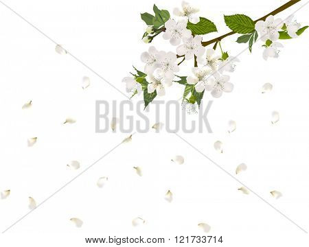 illustration with spring tree blossom isolated on white background