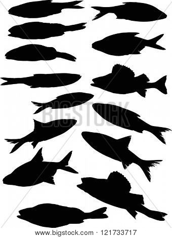 illustration with set of fish silhouettes isolated on white background