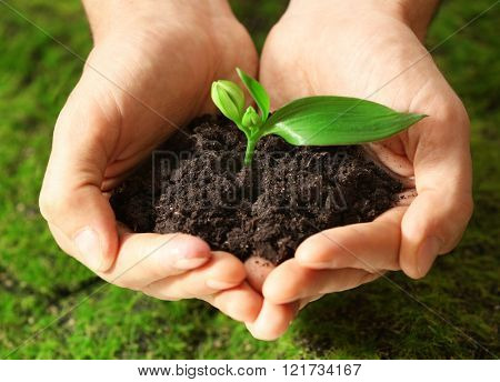Male hands holding soil and plant on grass background
