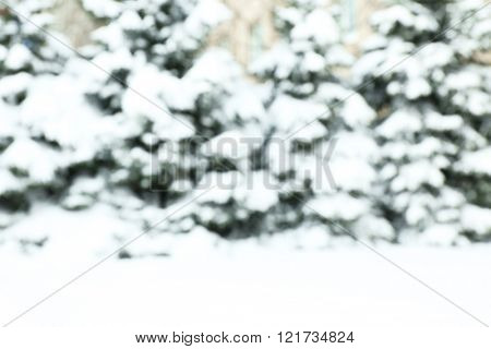 Winter background with snowy fir-trees