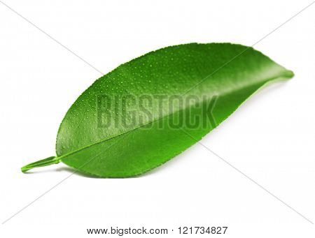 Ficus leaf, isolated on white