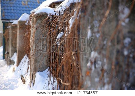 Snowy wall with winter plant