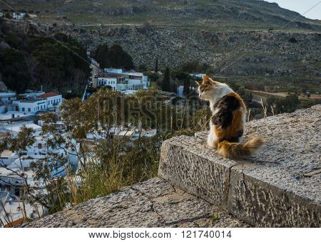 Cats at Lindos town in Rodos, Greece
