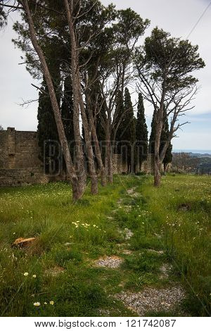 Scenic Landscape With Trees At Mount Filerimos On Rodos Island