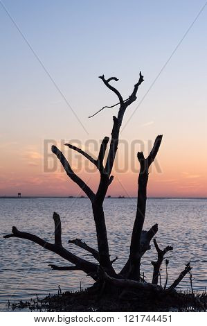 Sunset tree silhouette Fort Myers Bonita Springs town line Florida.  This is the view from Dog Beach.  Dogs can run on this beach leash free!