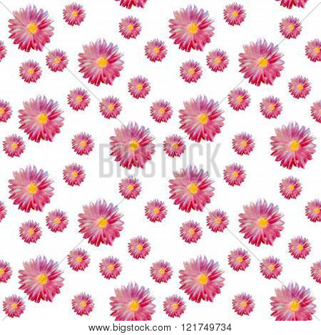Seamless Watercolor Pattern With Beautiful Aster Flowers.