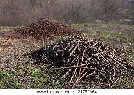 Cut A Handful Of Twigs On The Ground