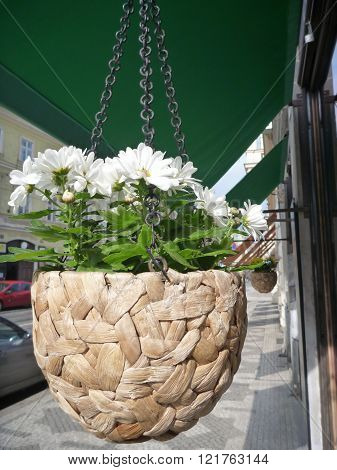 Flower Pot On A Basket Hanged On A Building