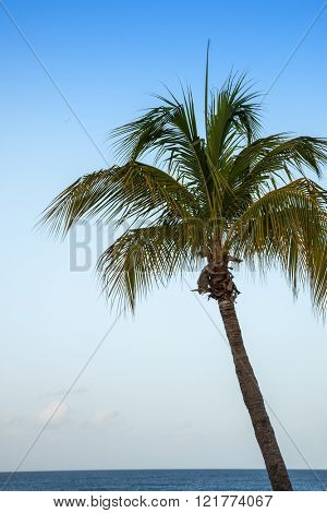 Palm tree with Caribbean ocean and clear blue sky