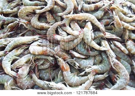 Closeup of Fresh shrimp at the market for sell
