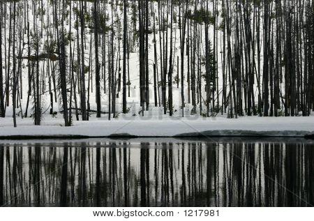 Winterforestriverreflection_6876