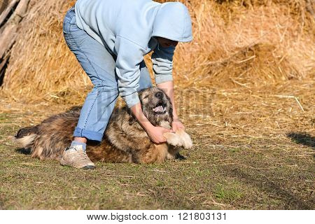 Young Man Playing With His Dog. Goofing, Petting And Cuddling On The Lawn
