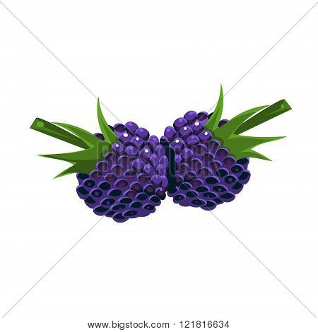 Blackberry Flat Vector Sticker