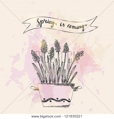 Set of vector hand drawn line art pot flowers and spring is coming lettering. Spring grape hyacinth ink drawing on grunge watercolor splash background.