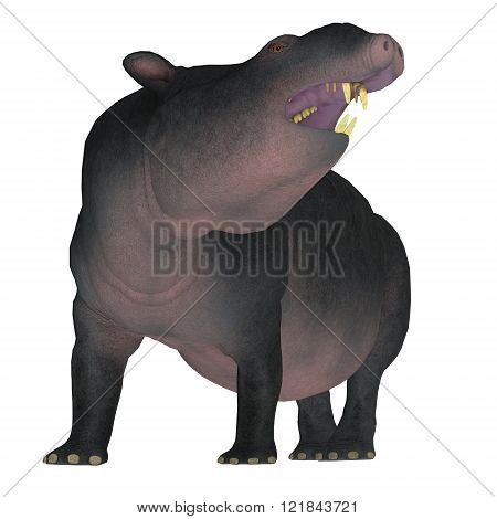 Moeritherium is an extinct mammal related to the elephant and the sea cow. This herbivore lived in Egypt during the Eocene Period.