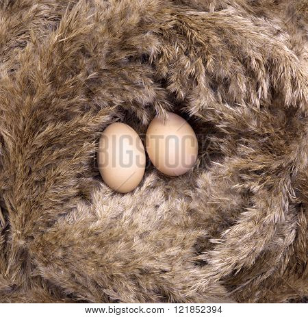 Two Eggs In A Bird's Reed Nest