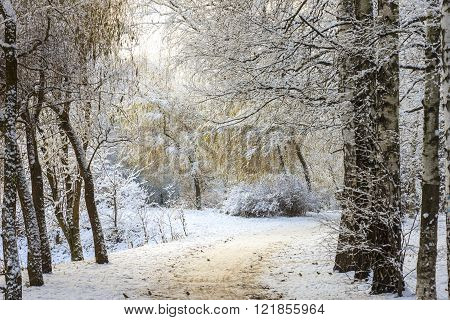 Winter forest landscape. Trees under a thick layer of snow. Russia, Moscow, Sokolniki park ** Note: Visible grain at 100%, best at smaller sizes