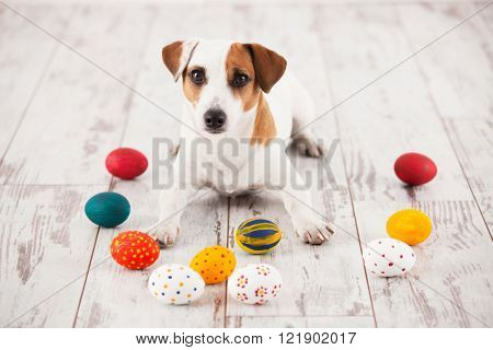 Dog with Eggs on wooden old boards. Easter celebration