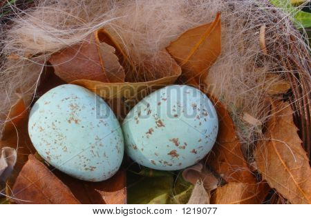 Blue Birds Eggs
