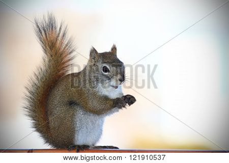 Portrait of a cute squirrel standing up.